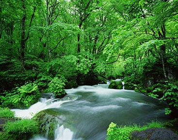 面の木原生林